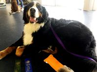 Hubble after winning first place in rally obedience